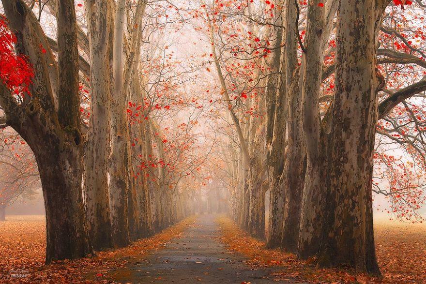 fotografia-bosques-otono-janek-sedlar (13)