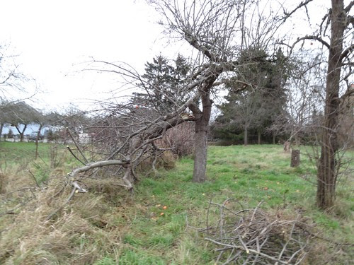 Apfelbaum Windbruch