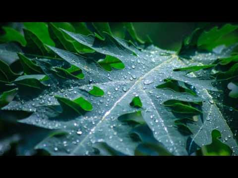 The Nature Sound of Rain
