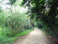 The jog path/walkway along the Kukkarahally lake