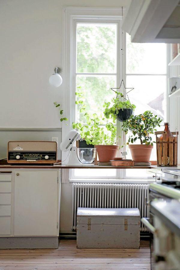Domowe planty