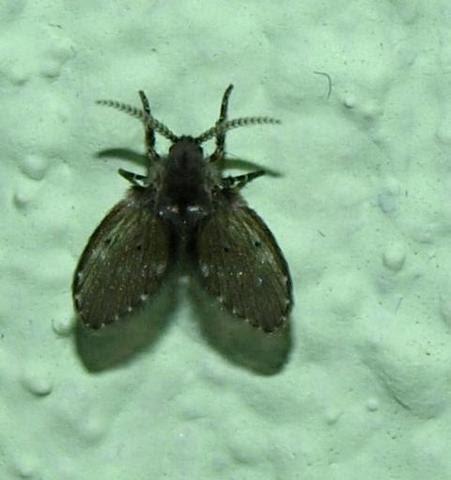 kleine schwarze fliegen im badezimmer - modernes