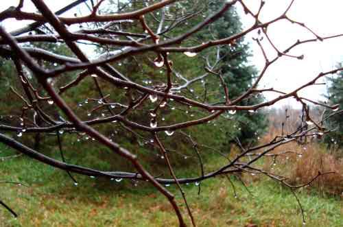 rain drop branches