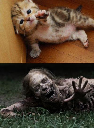 Dead Cat In Road. The Walking Dead Cat