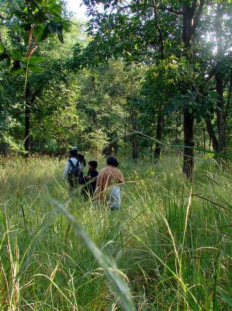Best Jungle Safari Holidays - You Must Explore In National Parks of India | Inditales