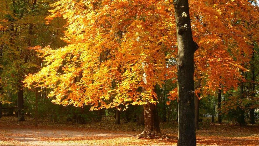 Goldener Herbst: Warum die Bäume diesmal so lange bunt bleiben