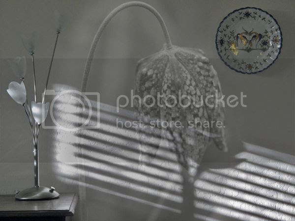 72 photo 72044_zps4f4e3be3.jpg