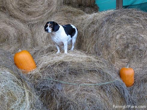 Pumpkin Bert (1) - FarmgirlFare.com