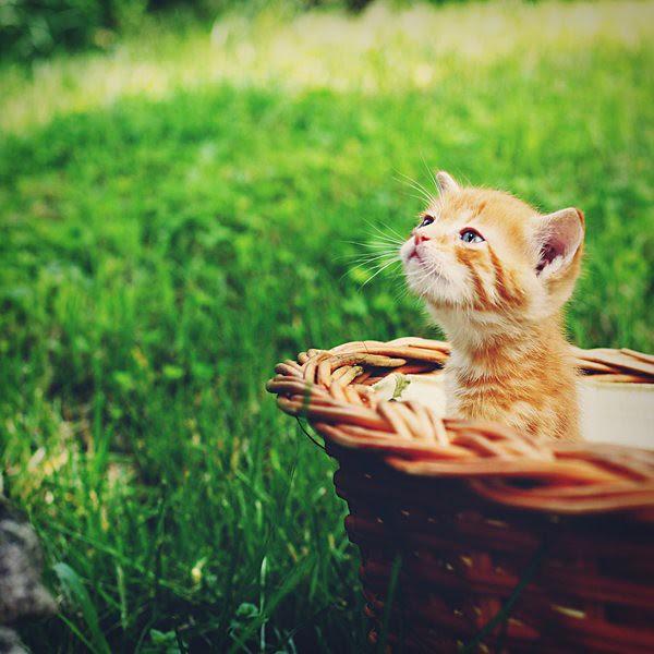 image found - http://ruuca.deviantart.com/art/Smells-like-spring-125306056?q=favby%3Ahromiakovahana%2F39304869&qo=94