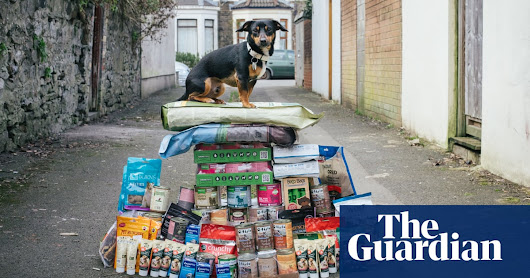 'I don't trust the government to look after me or my dog': meet the Brexit stockpilers | Politics | The Guardian