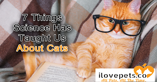 7 Weird Things Science Has Taught Us About Cats | I Love Pets