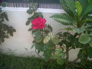 rosa torre benagalbón agosto 13