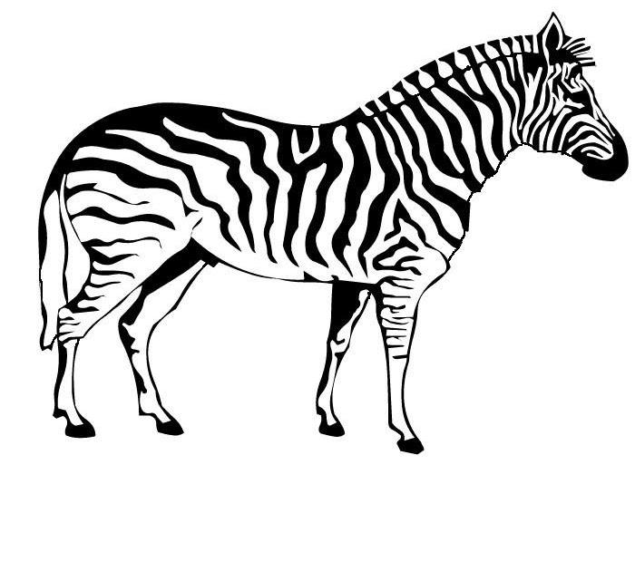 ausmalbild zebra kostenlos  cartoonbild