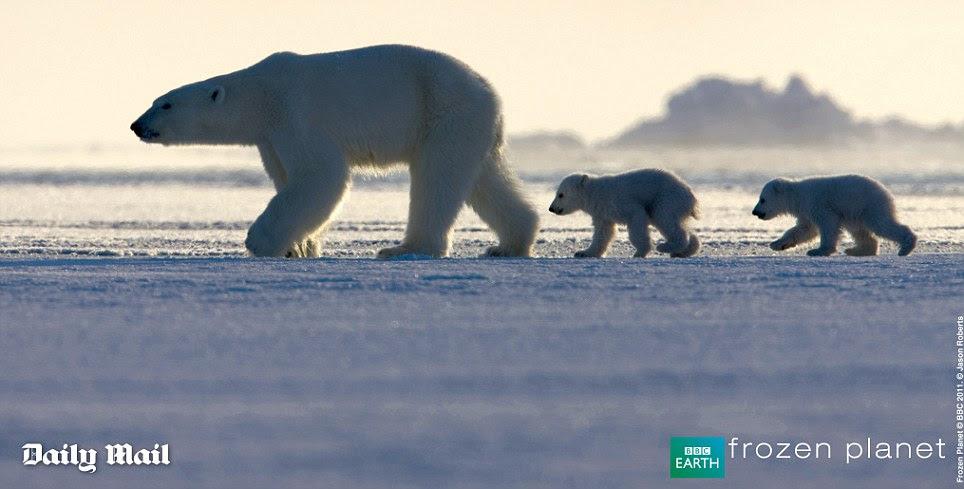 Com espetaculares paisagens polares e comportamento animal incrível, muitas vezes filmadas pela primeira vez, planeta congelado capta o drama de um mundo natural, extrema