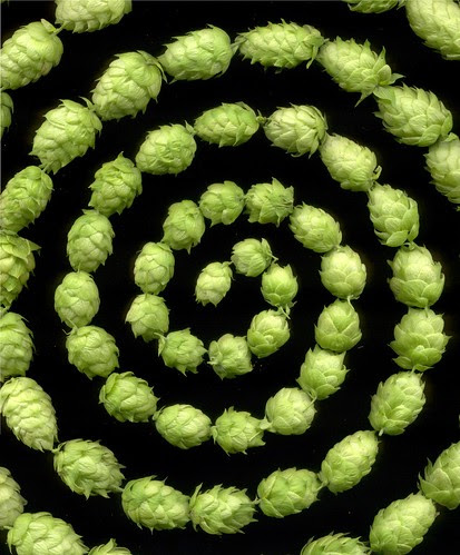10572 Humulus lupulus 384 by horticultural art