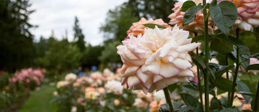 The Pacific Northwest's most beautiful public gardens
