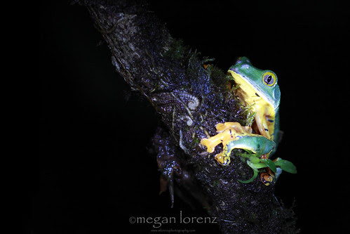 Frog & Creepy Crawlies by Megan Lorenz