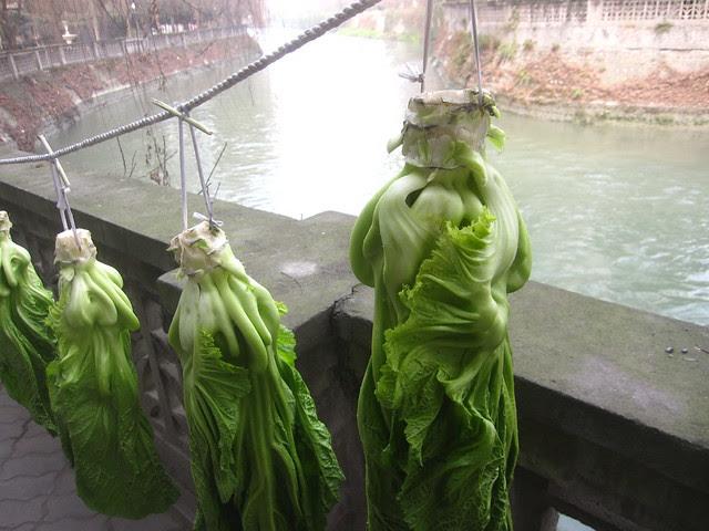 Hanging Greens, Hongguang