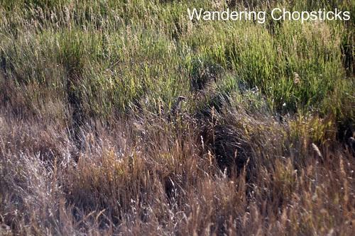 15 Petroglyph Point Trail - Mesa Verde National Park - Colorado 22