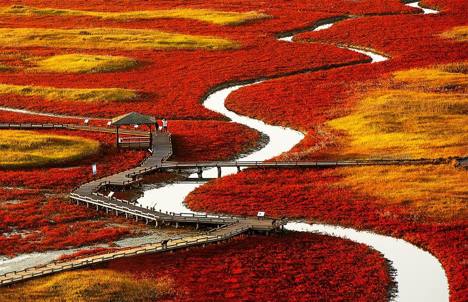 Red Fields Of South Korea Photography By Seung-Ki Kim
