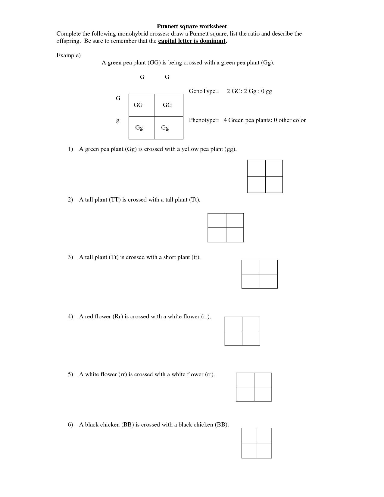 14 Best Images of Monohybrid Cross Worksheet Answer Key