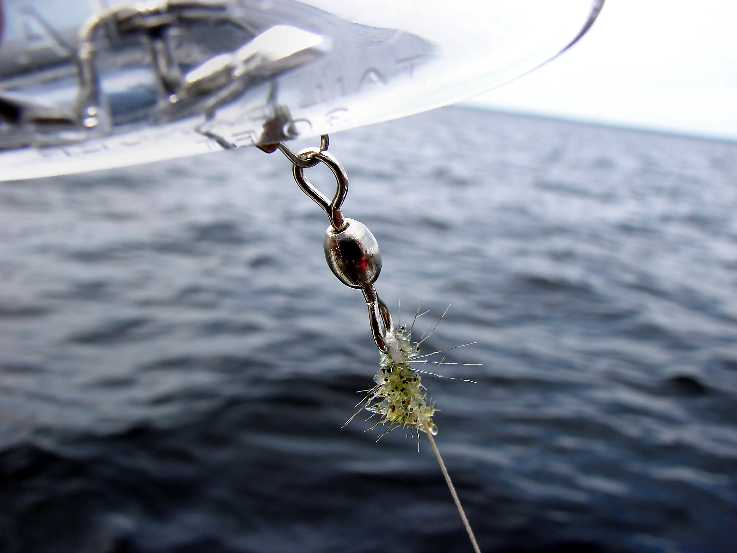 Lake Champlain Task Force Eradicating Spiny Water Flea Not Possible