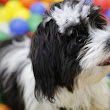 Choosing the Best Interactive Toys and Food Puzzles For Your Dog