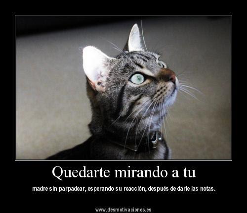 Imagenes De Gatitos Tiernos Con Frases De Amor Gatos T