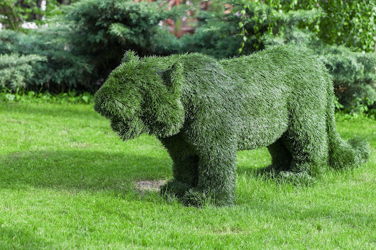 Landscaping Experts Offer Professional Tips for Picking the Right Topiary for Your Home