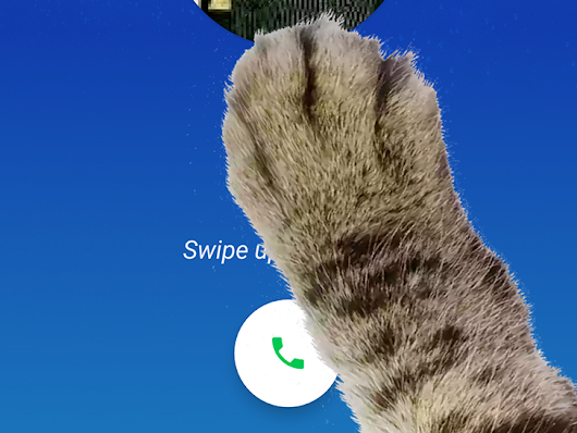 [Pawcket Dialing] Google Phone 9.0 hides a hilarious Paw Mode easter egg