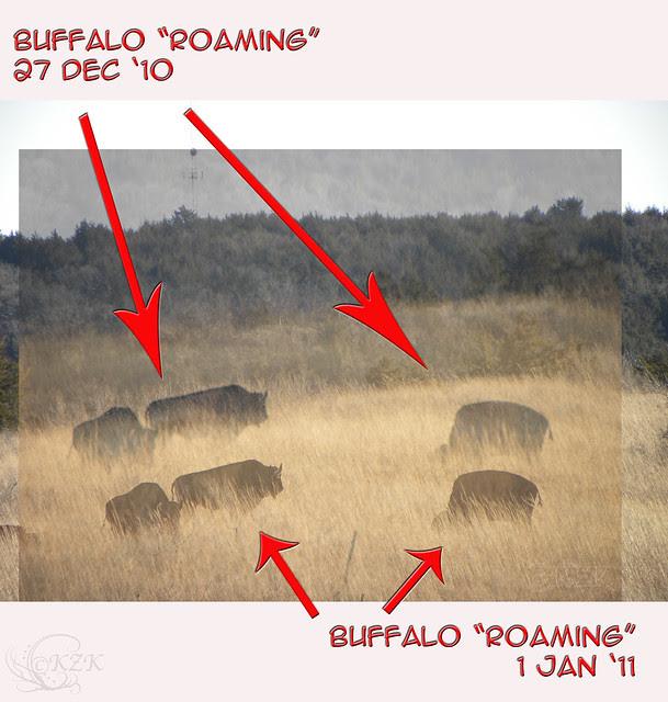 BuffaloThenNow