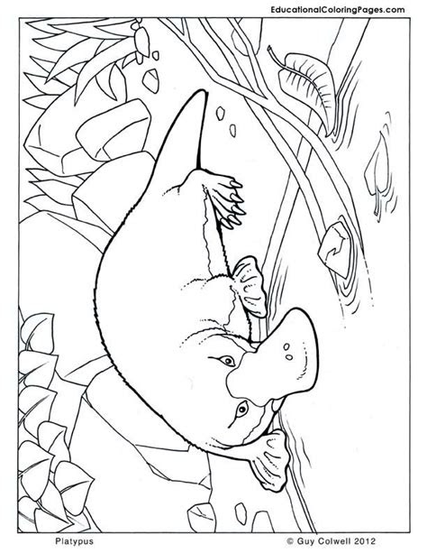 platypus coloring australian animal coloring pages