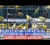 Harga Kandang Ternak Burung Kenari / Kandang Ternak Kenari Jual Hewan Peliharaan Makanan Aksesoris Terlengkap Di Indonesia Olx Co Id - Banyak orang yang lebih memilih anakan burung kenari untuk di pelihara, salah satu alasannya adalah memiliki harga yang cukup murah dibandingkan.