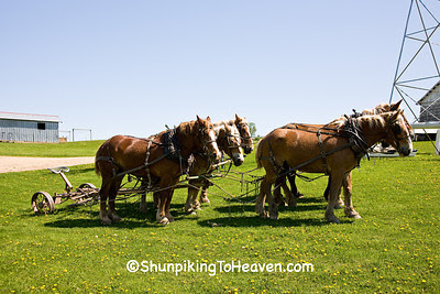 Amish Horse Team, Sauk County, Wisconsin