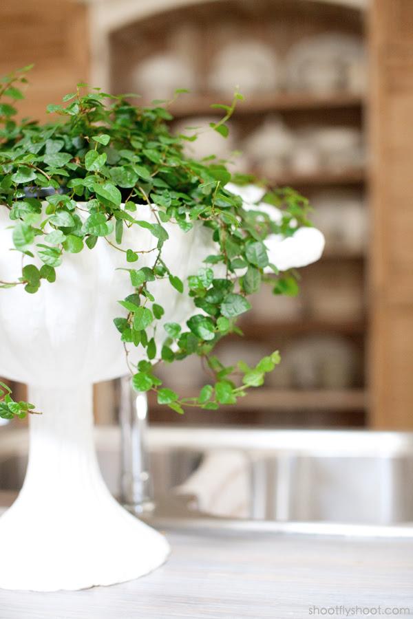 Atchison Αρχική | Ivy Plant
