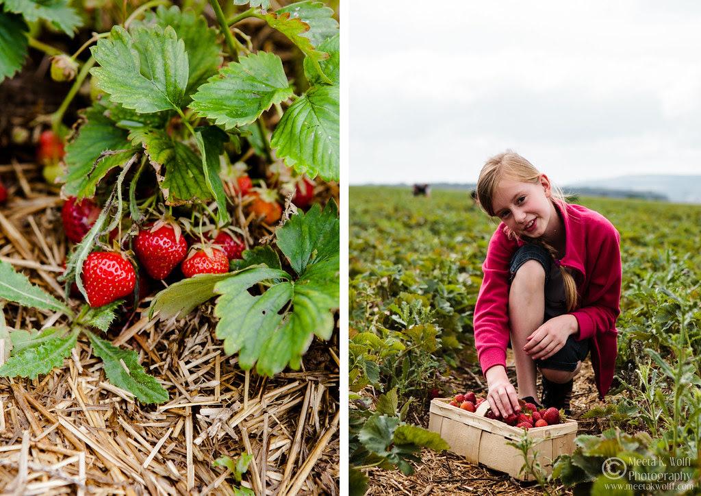 Diptych Strawberry Fields 2 by Meeta K. Wolff