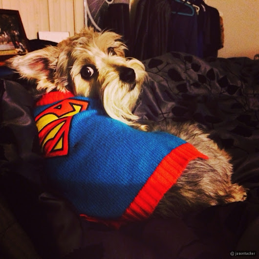 My super dog Lincoln | Jason Tucker