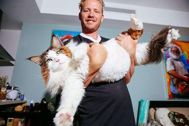 Maior gato de Nova York faz sucesso na internet