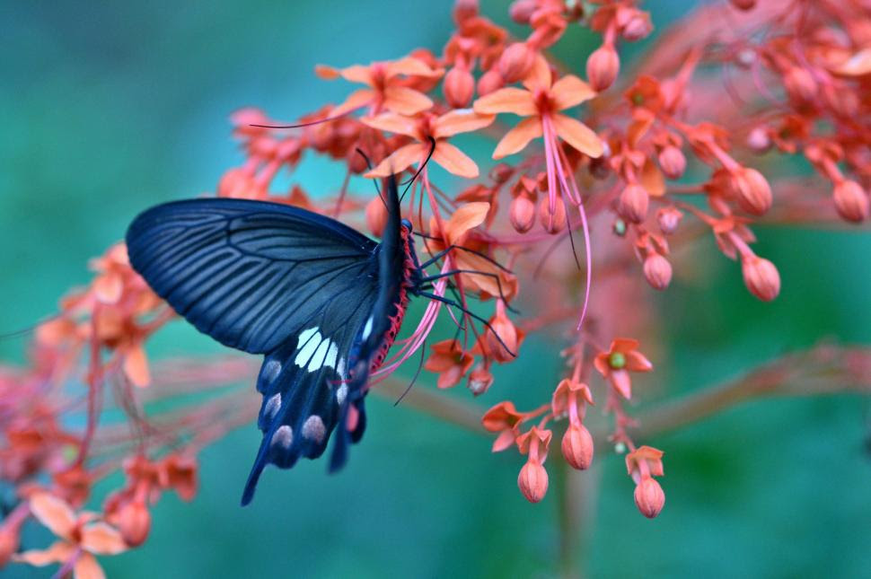 Butterfly on flower amazing wallpaper | nature and ...