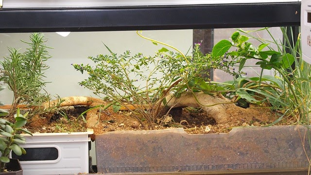 龜貓生態園區: 新的玻璃缸