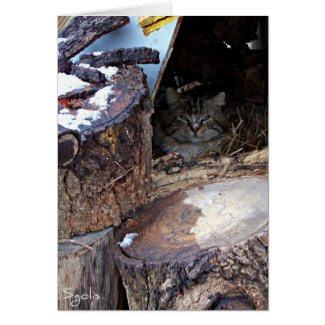 Feral Cat in Winter Note Card Greeting Cards