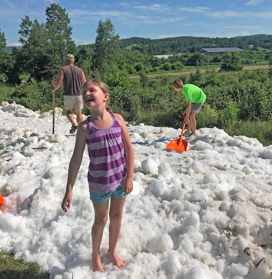 Sledding In July: Snow-Saving Experiment Tapped For Holiday Merriment