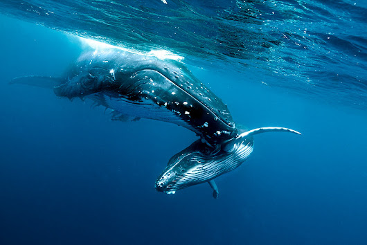 The Best Trips for Amazing Encounters With Whales