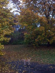 RainyFoliage_102809_sophieB