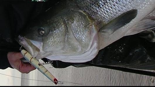 John skinner google for John skinner fishing