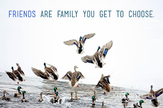 Flying Ducks And A Friends Quote by Nishanth Gopinathan