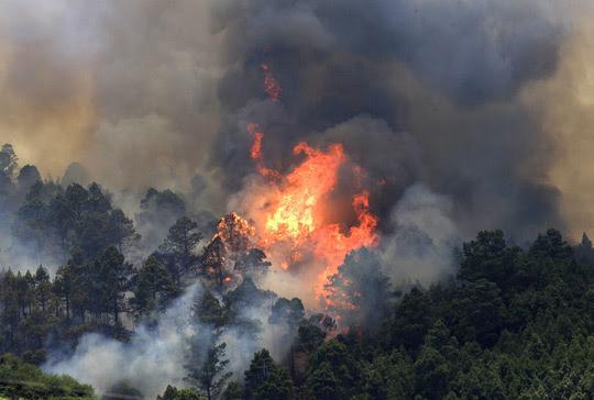 fuego en los bosques de Tenerife