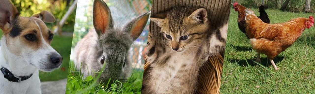 """Résultat de recherche d'images pour """"le  monde  des  animaux"""""""