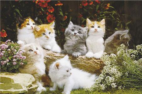 baby cats kitten puppies