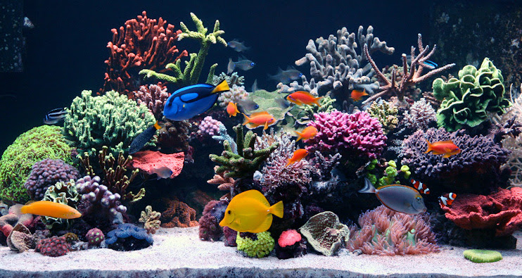 Custom Aquariums Palm Beach Aquarium Supply Blue Earth Aquariums